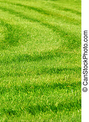 green grass background with stripes