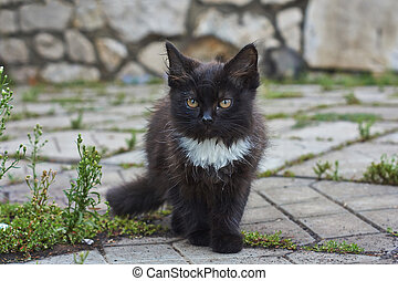 Cub cat  on a stone path. - Cub cat walks on a stone path.