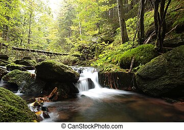 Forest stream in early autumn.
