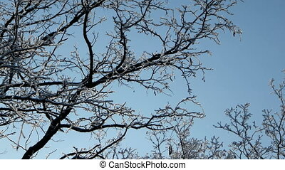 Sun shines through trees on blue sky background. - Snow...