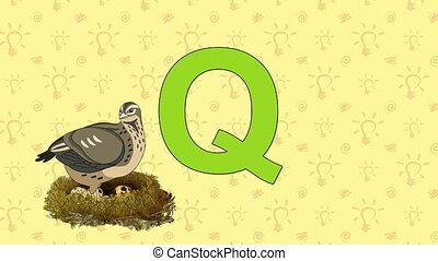 Quail. English ZOO Alphabet - letter Q - Animated English...