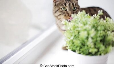 cat on window sill at home - pets and animals concept - cat...