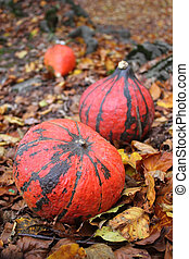 Hokaido Pumpkin and autumn leaves in the forest