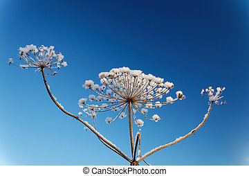 dry branch plants with frost against a blue sky
