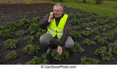 Gardener talking on phone and weeding strawberries