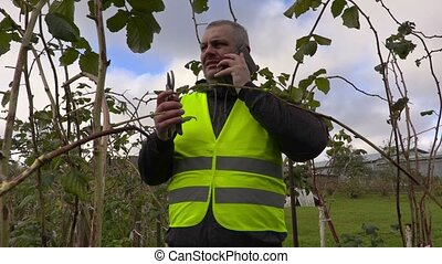Farmer with smartphone and scissors near raspberry seedlings