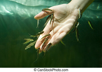 Hand in water with fishes Fish spa for skin care