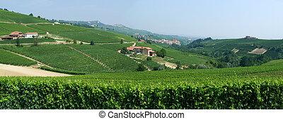 viñas, aldea,  piedmont,  barolo