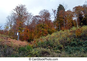 Undergrowth and sloping pine autumn colors
