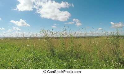 Meadow grass on outskirts town - Against the backdrop of...