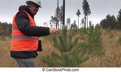 Forester walking and checking new growth pine