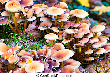 A Lot of Mushrooms in The Wood in Autumn