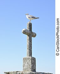 Seagull on stone cross in Bayona, Galicia, Spain.
