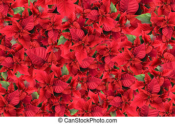 christmas flower background