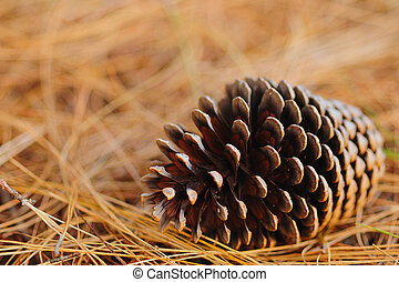 Pine cone - A pine cone on a dead bed of needles