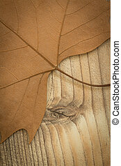 Macro of a dry leaf in the fall