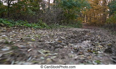 bog road in autumn forest - bog road in the autumn forest...