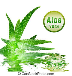 close-up photo of green aloe vera with icon isolated on...