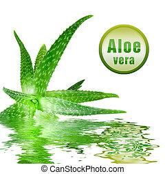 primer plano, foto, verde, áloe, Vera, icono,...