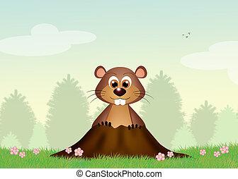Groundhog in the den - illustration of Groundhog in the den