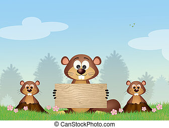 Groundhog in the meadow - illustration of Groundhog in the...