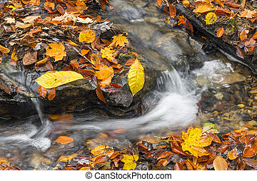 Babbling Autumn Brook - Water courses around a rocky stream...