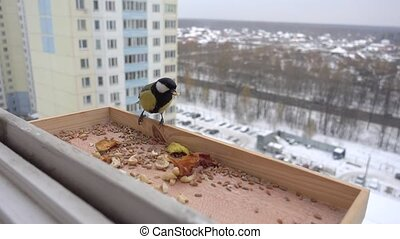 Wild tit eating in a manger at winter
