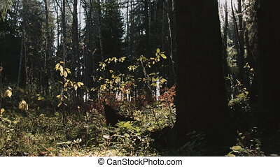 Autumn forest in sunlight - Landscape with trees and yellow...