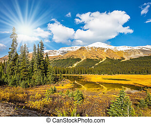 The boggy valley in the Rocky Mountains of Canada.