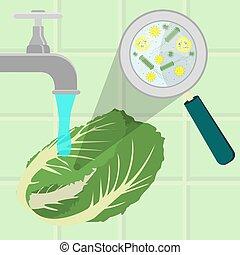 Washing contaminated cabbage - Contaminated cabbage being...