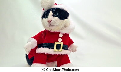 Cat Santa Christmas - funny cat with Santa Claus hat on...