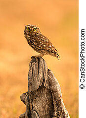 Small owl in the nature - Small owl on a tree trunk in the...