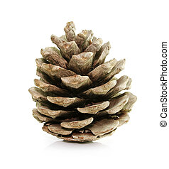 pine fir-tree cone isolated on white - pine fir-tree cone...
