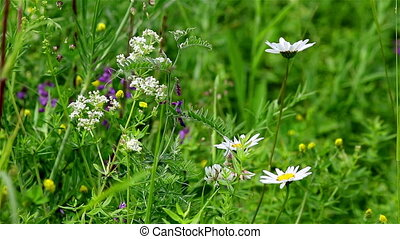 Wild flowers background - Generic view of various field...
