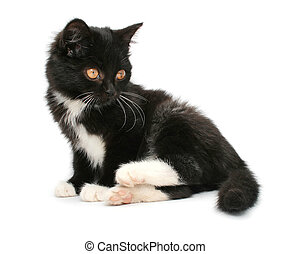 little black kitten isolated on white background