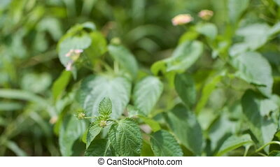Selectively focussed stock footage , from buds to flowers,...