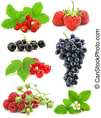 collection of berry fruits isolated on white background