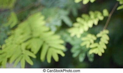 Green leaves moving in air, forest stcok footage - Beautiful...