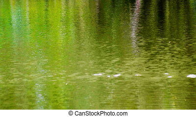fresh water flowing green reflection - fresh water flowing ,...