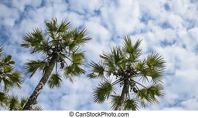 Palm tree leaves moving in air, time lapse movie - Beautiful...