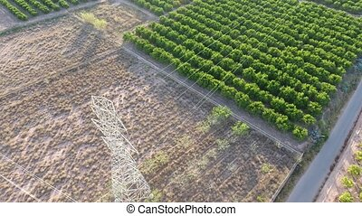 Aerial view of orange fields and electric tower - Orange...