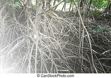 Mangrove Forest South America Background