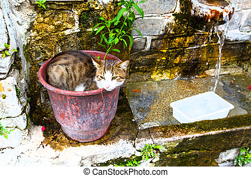 Cat in the flower pot - Cat with green eyes lying in flower...