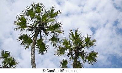 Palm tree leaves moving in air, time lapse movie - Beautiflu...