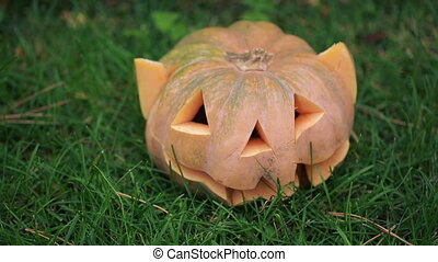 Halloween pumpkins in autumn forest. scary face