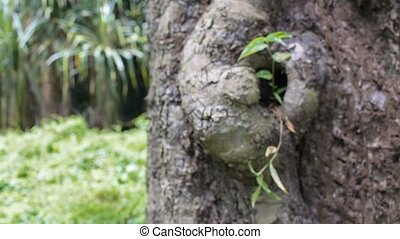 New plant growing on old tree, conceptual HD video stock...