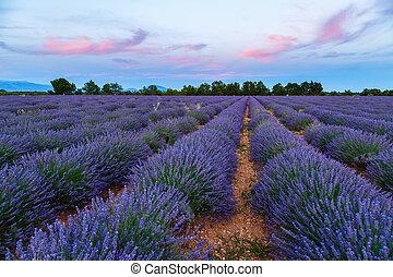 Feld, Sonnenuntergang, Lavendel, landschaftsbild, sommer