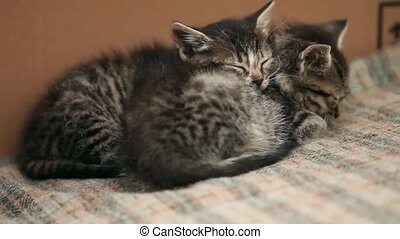 two sleeping gray kitten close to loop ready file