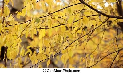 Yellow Autumn Foliage close to loop ready file