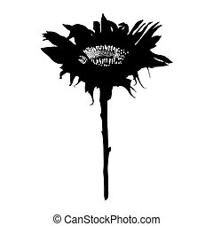 sunflower stencil - Sunflower stencil silhouette isolated on...